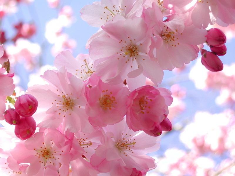Spring-a-ding-ding!