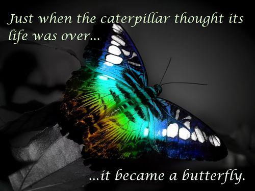 Total Food Replacement is like being a Butterfly